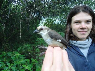 Pale-headed Brush Finch